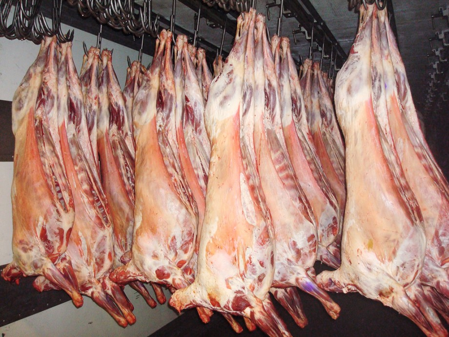 Buy Fresh Beef Meat in Pakistan - Suppliers, Wholesalers.jpg